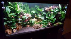 Vissenaquarium (@vissenaquarium) | Twitter Vader, Aquarium, Twitter, Aquarius, Fish Tank