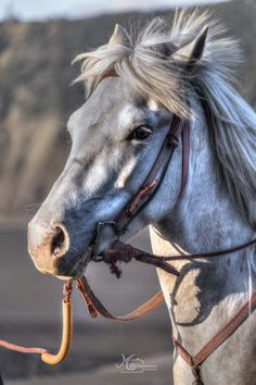 """Indonesian Horse - """"The essential joy of being with horses is that it brings us in contact with the rare elements of grace, beauty, spirit and freedom."""" ~Sharon Ralls Lemon Bromo Tengger Semeru National Park - Indonesia"""