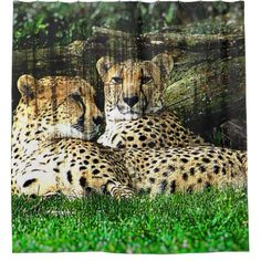 Cheetahs Grunge Effect Photo Shower Curtain - photographer gifts business diy cyo personalize unique