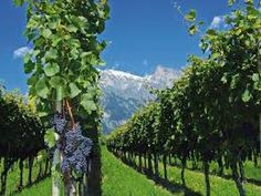 Harvest time in Mendoza, Argentina Mendoza, Harvest Time, Fruit Trees, Vineyard, Mountains, Outdoor, Image, Decoupage, Frases
