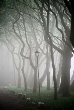 ARTFINDER: Spooky Trees by Dean Weston - Rain and sea mist shroud an avenue of trees near the coast at Ravenscar, North Yorkshire.