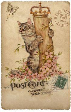 Post cards Kats