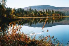 Autumn colours in Raattama, #Lapland.