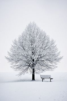 "Photo ""The White Tree"" by Benson Kua Snow Photography, Amazing Photography, Landscape Photography, Winter Szenen, Snow Scenes, Winter Beauty, Winter Pictures, Winter Landscape, Beautiful Landscapes"