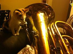 Dr. Hurley's former foster kitten has some seriously mad musical skills! (ADOPTED 3/12)
