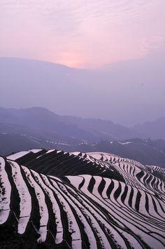 Terraced Rice Fields, Jinkeng Rice Terraces, Longsheng, Guilin _DSC4677 (by ohmytrip)