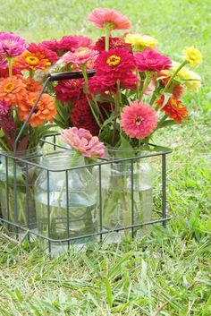 """Zinnias in a Milk Bottle Carrier. They are such """"honest"""" flowers-easy to grow and make nice bouquets for the house and neighbors or sick gifts. (I love zinnias and snapdragons! Summer Flowers, Fresh Flowers, Happy Flowers, Growing Flowers, Beautiful Flowers, Flower Quotes, Arte Floral, Flower Farm, Green Life"""