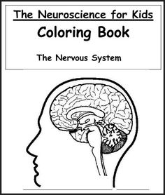 Brain coloring page School Pinterest Brain, Human