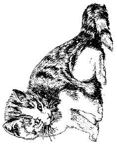 kleurplaat Poezen en katten - Poes