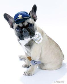 Bruno copyright 2012 zendog pet portraits