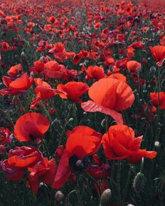 Yasmine Floral Design: Poppies