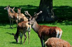 Free Image on Pixabay - Red Deer, Herd, Stag, Hind, Buck Lightroom, Photoshop, Photography Props, Animal Photography, Photography Hashtags, Photography Accessories, Photography Basics, Photography Awards, Underwater Photography