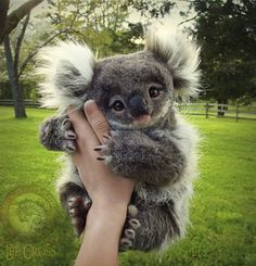 Koala toy by Lee Cross Cute Wild Animals, Baby Animals Super Cute, Baby Animals Pictures, Cute Little Animals, Cute Animal Pictures, Cute Funny Animals, Animals Beautiful, Animals And Pets, Farm Animals