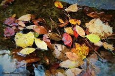 #alabama #alabamaparks #alabamafindings #cullmanal #cullman #love #nature #photography #pictures #photo #river #leaves #floatingleaves #colorful #fall #yellow #red #brown #green #beautiful #beauty #naturephotography #professionalpictures #pretty #hannahhansenphotography