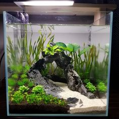 A central hub for Aquascaping techniques, articles, news, and more. We also hold a monthly contest for Aquascaping, with the place winner.