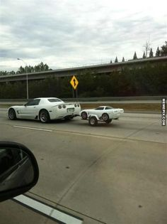 Here we have a newborn Corvette in it's natural habitat... - MemePix