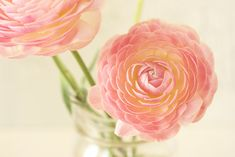 Beautiful—Ranunculus (asiaticus)❣ mellow-stuff mie • Flickr