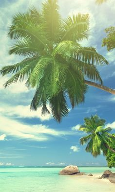 Beautiful tropical beach - Landscape iPhone wallpapers @mobile9 | #nature