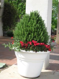 Potted Plant With Red - Fort Worth Botanical Gardens http://www.redgage.com/photos/funstuff/potted-plant-with-red-fort-worth-botanical-gardens.html