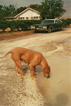 William Eggleston. Algiers, Louisiana