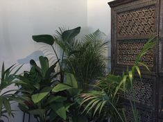 SM green thum The Outsiders, Bring It On, Green, Plants, Furniture, Instagram, Home Furnishings, Planters, Plant