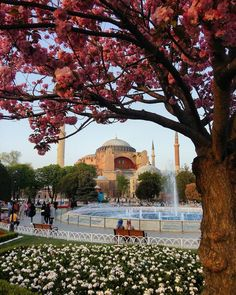 View of Hagia Sophia in Istanbul under Judas-tree. Visit Istanbul, Istanbul City, Istanbul Travel, Bulgaria, Places To Travel, Places To Visit, Empire Ottoman, Hagia Sophia, World Religions