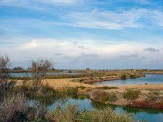 La Camargue Grand site de France guide du tourisme du Gard Languedoc-Roussillon
