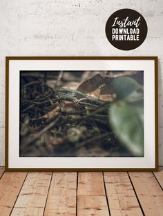 Printable Reptile Wall Art, Wildlife Photo Print, Macro Animal Picture, Office Decor, Home Wall Art Home Wall Art, Home Art, Wall Art Decor, Printing Services, Online Printing, Horizontal Wall Art, Some Beautiful Images, Printable Pictures, Types Of Printing