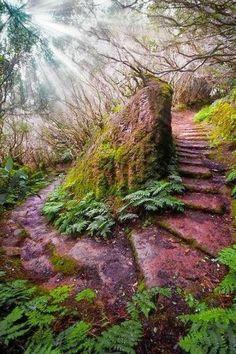 Ho la consapevolezza e la certezza che dobbiamo fare qualcosa per la sopravvivenza della terra, non siamo i padroni della terra ma siamo i suoi figli. ( Grey owl / Gufo grigio naturalista 1904 / 1938 ) in foto un sentiero in una foresta nell'arcipelago di Madeira (Portogallo)
