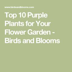 Top 10 Purple Plants for Your Flower Garden - Birds and Blooms