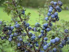 Food, Gardening, Plant, Essen, Lawn And Garden, Meals, Yemek, Eten, Horticulture