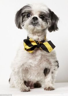 Glamour shots of homeless pets