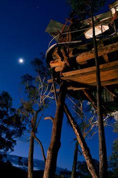 treehouse moon