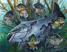 Panfish and Blue Catfish painting Wildlife Paintings, Wildlife Art, Fish Drawings, Animal Drawings, Catfish Tattoo, Deer Hunting Tattoos, Blue Catfish, Happy Fishing, Fish Background