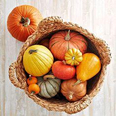 Harvest Pumpkin Basket autumn fall pumpkin halloween harvest pumpkins halloween pictures happy halloween halloween images halloween decorations pumpkin decorations outdoor halloween decorating