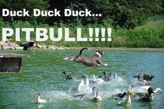LOL Humorous images (03:26:07 PM, Monday 04, April 2016 PDT) – 40 pics