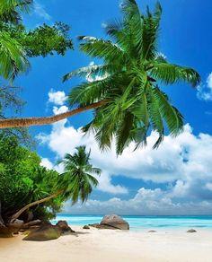 Beach On Mahe Island In Seychelles Стоковые фотографии 140696425 : Shutterstock Seychelles Beach, Beach Wall Murals, Hawaii Style, Photo Backgrounds, Hanging Wall Art, Hanging Tapestry, Beach Photos, Beautiful Beaches, Trip Planning