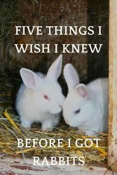This list of five things I wish I knew about rabbits will save you time, frustration, and maybe even a few scars. Rabbit Farm, Rabbit Run, Rabbit Toys, Mini Lop Rabbit, Rabbit Diet, House Rabbit, Bunny Cages, Rabbit Cages, Indoor Rabbit Cage
