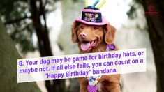 Happy Bday Dog Festivities Super Cute Dogs, German Shepherd Dogs, Are You Happy, Growing Up, Things To Think About, Happy Birthday, Pets, Projects, Happy Brithday