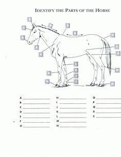 Printables Horse Anatomy Worksheet count paper and it is on pinterest free printable horse worksheets red oak rider program