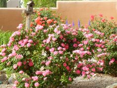 Spring blooms | Flickr - Photo Sharing!