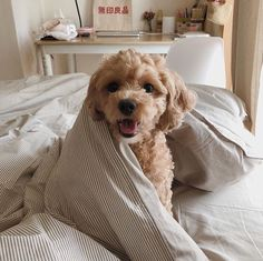 Fantastic cute dogs tips are offered on our web pages. Take a look and you wont be sorry you did. Cute Dogs And Puppies, I Love Dogs, Doggies, Baby Dogs, Silly Dogs, Adorable Puppies, Animals And Pets, Funny Animals, Puppy Care