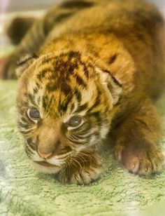 Throwback - Suka as a newborn (pic by Tyler Green)