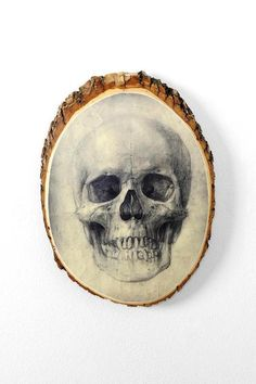 Blair Cedar Skull Plaque #m,ystical #urbanoutfitters