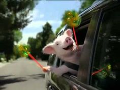 The original GEICO ad with Maxwell the Pig!  I JUST LOVE MAXWELL!!!!