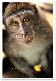 Cute ha? Yeah, say that after 4 pack attack you from behind. Scar people scar! And did you know hoooow deadly rabies is....with a 5 year incubation period. Keep the cute monkey!