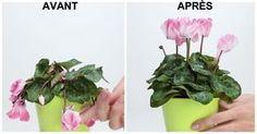 Ramenez vos plantes à la vie en quelques jours!
