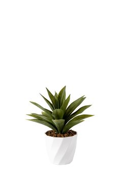 Agave In Twist Pot| Mrphome Online Shopping