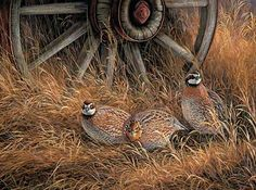 Wagon Wheel Bobwhites-Quail by Rosemary Millette : Wild Wings Wildlife Paintings, Wildlife Art, Image Deco, Hunting Art, Bird Poster, Street Art Photography, Farm Art, Cowboy Art, Country Art
