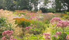 """Jakobstuin, owned and designed by Jaap de Vries, who calls it an """"Ode to the Dutch Wave."""" Visit this garden with garden designer Carolyn Mullet of Carex Garden Design. #gardentour"""